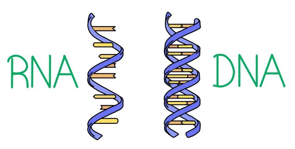 RNA'nın DNA'ya Dönüşümü